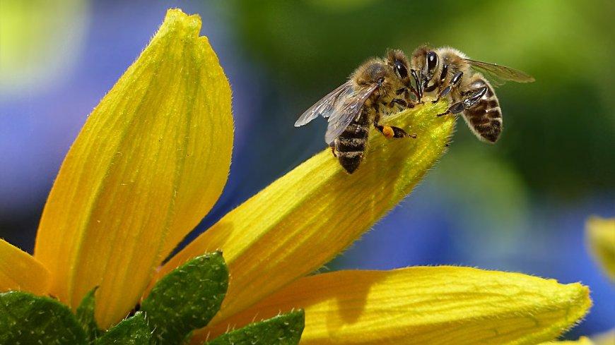 zdjęcie pszczół